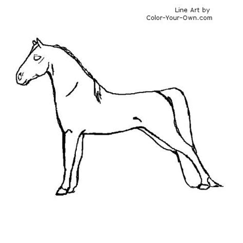 morgan horse coloring page morgan horse coloring page
