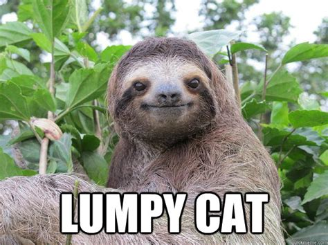 lumpy cat stoned sloth quickmeme
