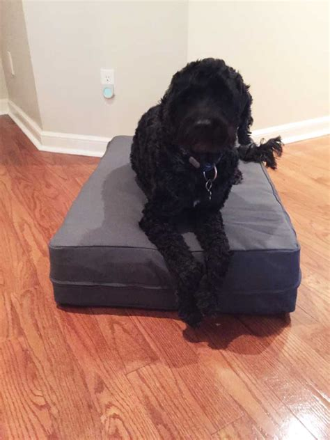 rubber dog bed covered dog bed with orthopaedic high end latex filling