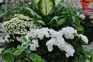go monochromatic try an all white garden weidners gardens