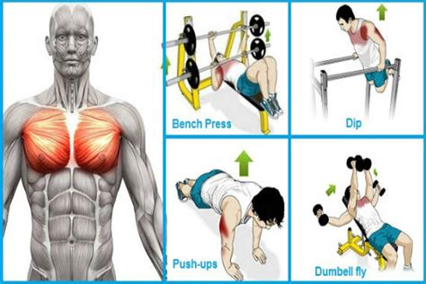 how to improve your chest muscles at home 28 images
