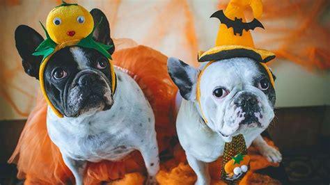 top  pet costumes  halloween  rachael ray show