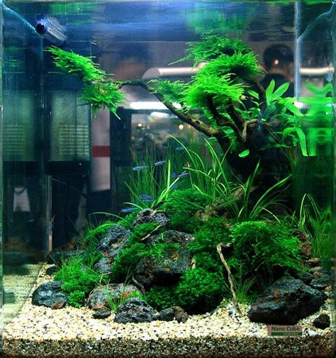 small aquarium aquascape small aquarium aquascape 1000 ideas about nano aquarium on