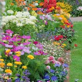 Garden Flowers And Plants A Wide Range Of Flower Plants From Suttons Seeds Suttons