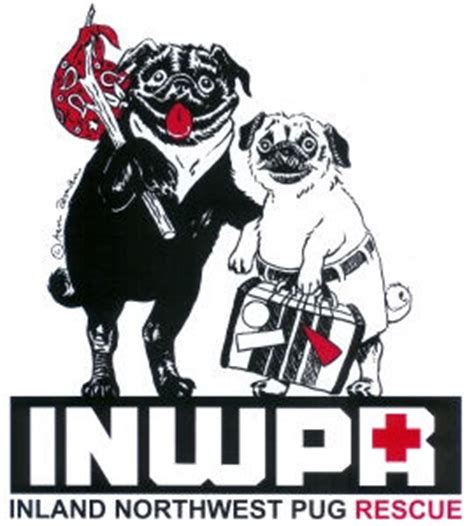 nw pug rescue inland northwest pug rescue puggy