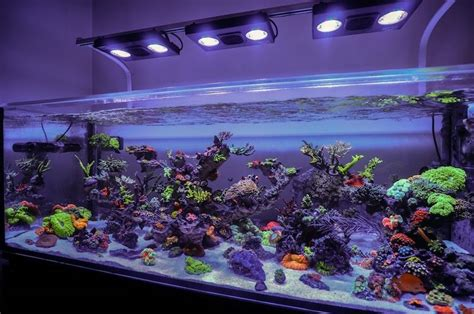 membuat filter aquarium laut 8 peralatan membuat aquarium air laut cara budidaya ikan