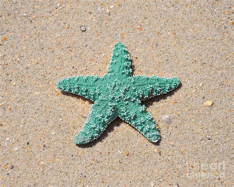 Metal Star Home Decor Sea Star Aqua Photograph By Al Powell Photography Usa