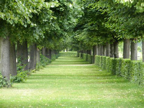 wallpaper pemandangan alam hijau gambar pemandangan pohon alam hutan menanam halaman