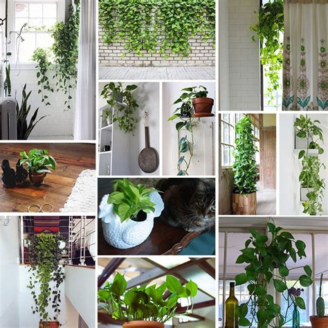low light hanging plants indoors the 25 best ideas about pothos plant on