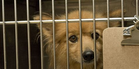 puppy mill laws new york gov andrew cuomo signs enabling local regulation of puppy mills huffpost