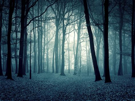 film blue woods wallpapers twilight forest