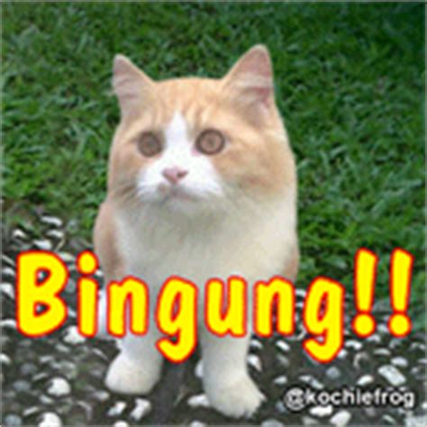 film lucu kucing kumpulan dp blackberry lucu galau sedih motivasi kocak