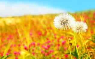Poppies Flowers Summer Screensavers 21523 2560x1600 Px Hdwallsource Com