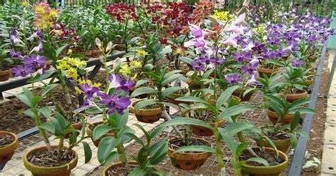 Pot Anggrek cara menanam bunga anggrek yang benar di pot