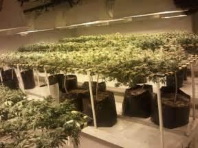 grow room setup the perfect cannabis grow room design amp videos