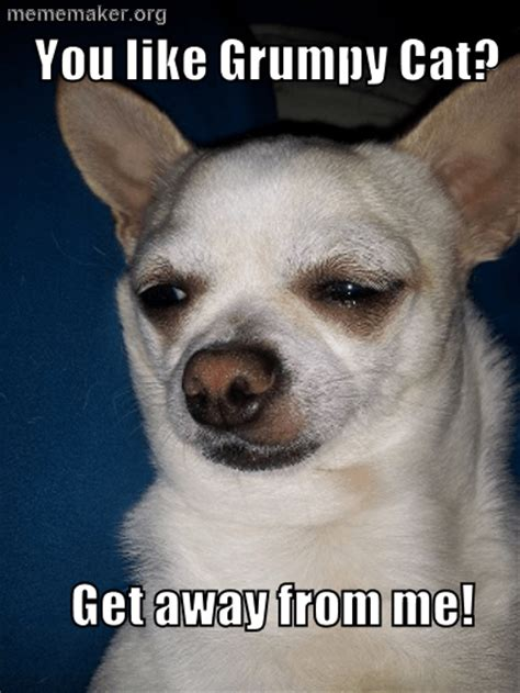 Chihuahua Meme - cute chihuahua puppies memes