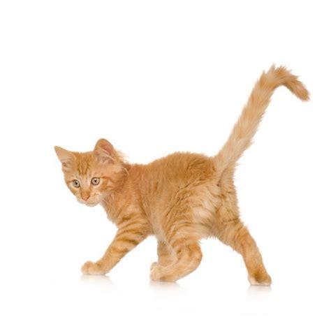 come alimentare un gatto come nutrire un gatto denutrito 5 passi