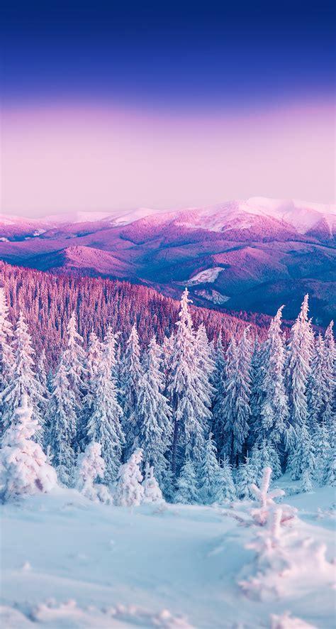christmas trees covered  snow hd desktop wallpaper high