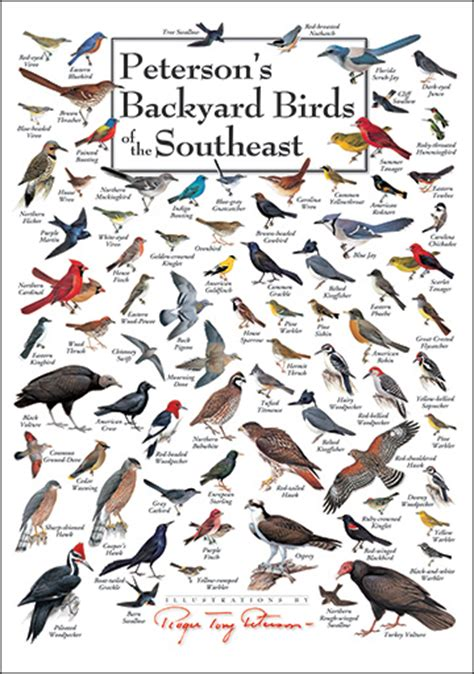 foldingguides peterson s backyard birds of the