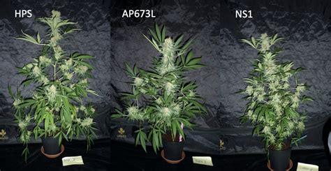 hps  led  cannabis cultivation valoya led grow lights