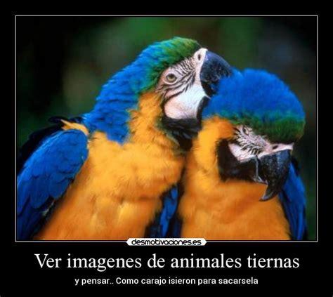 Ver Imagenes Sorprendentes De Animales | ver imagenes de animales tiernas desmotivaciones