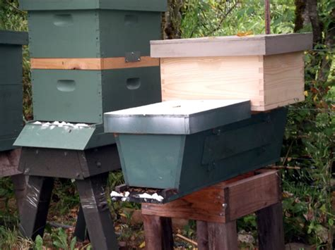 top bar hive conversion to langstroth hybrid billy and