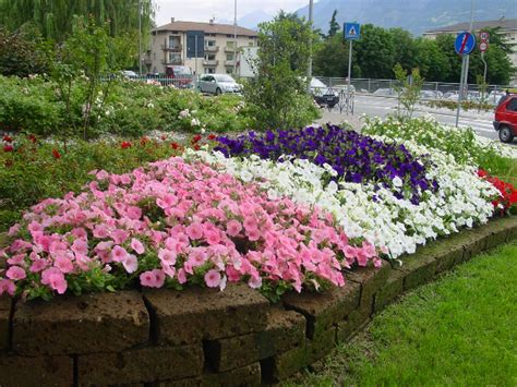 fiori per aiuole invernali aiuola aromatiche forum di giardinaggio it