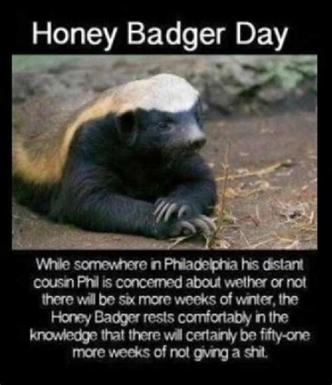 Honey Badger Don T Care Meme - honey badger don t care meme pinterest