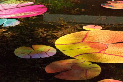 Gorden Lotus lotus in motion the watercolour project by