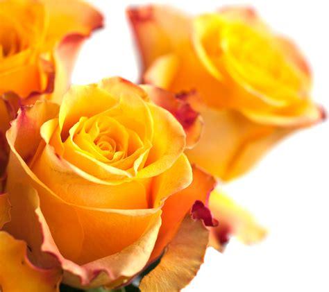 imagens de flores com frase frases de mulher flores para facebook sonhosbr