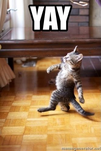 Yay Meme - yay walking cat meme generator