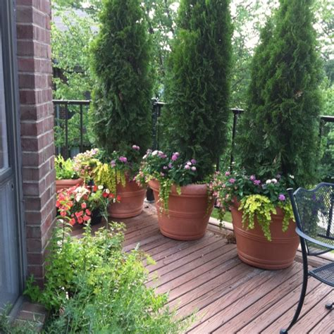 Summer Planter Ideas by 51 Best Images About Seasonal Planter On Planters East Hton And Pansies