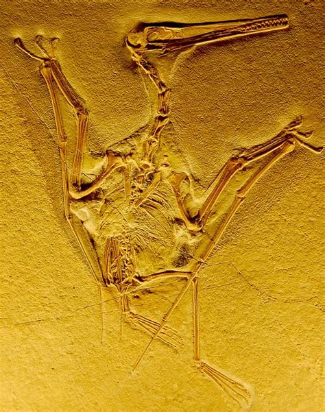 fossil by fossil comparing dinosaur bones books 37 best images about dinosaur skeletons on