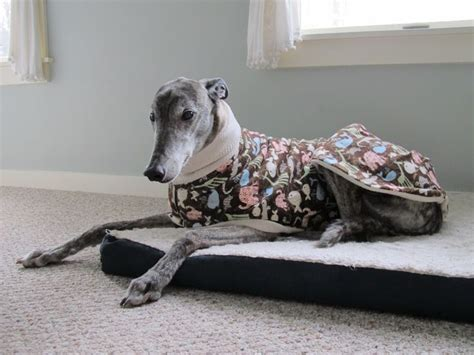 pattern greyhound coat 35 best images about dog coat patterns on pinterest