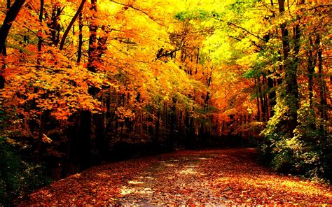 fall backgrounds autumn images autumn wallpaper hd wallpaper and background