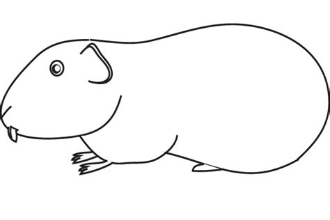 coloring page guinea pig free coloring pages of guinea pig worksheets