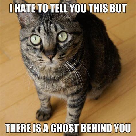 cat meme cat memes purrfect