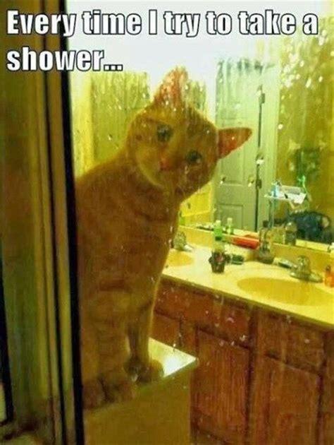 Talking Cat Meme - pinterest the world s catalog of ideas