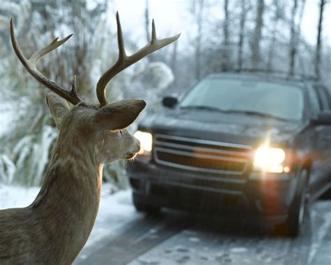do whistles work do car deer whistles work