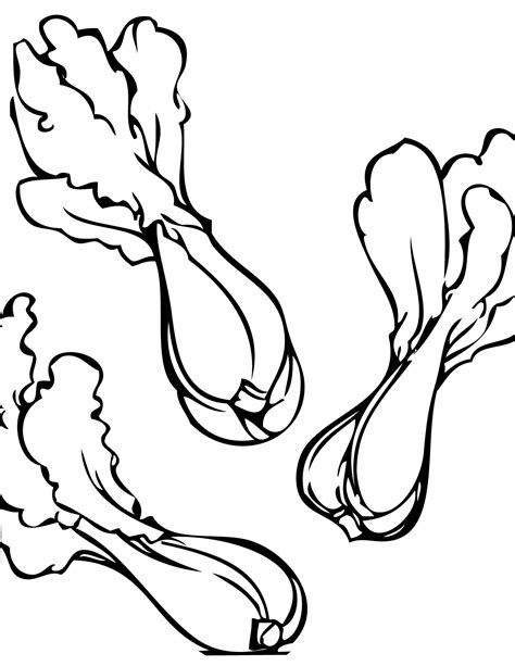 chinese cabbage drawing