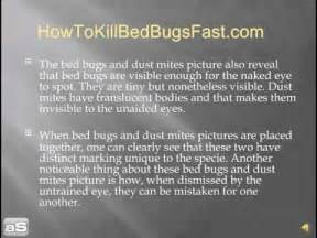 Why Do Bed Bugs Bite The Difference Between Bed Bugs Pictures And Dust Mites