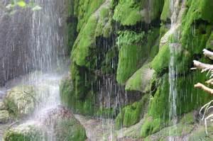 Backyard Wildlife Camera File Base Of Gorman Fall Like Raining Jpg