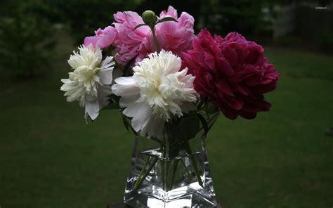 peony vase peonies in a vase wallpaper flower wallpapers 40139