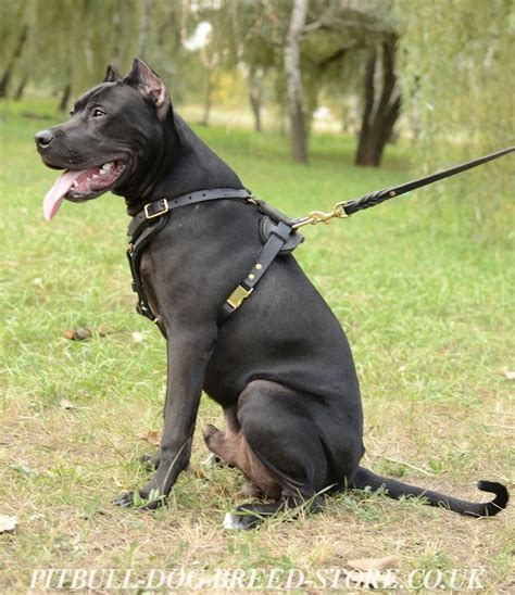 large breed harness best harnesses for large breed dogs best gates for large dogs elsavadorla
