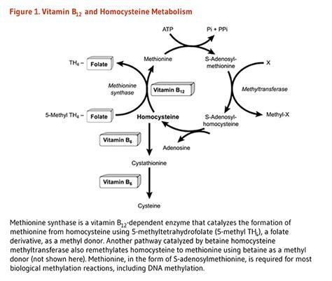 b12 creatine test vitamin b12 linus pauling institute oregon state