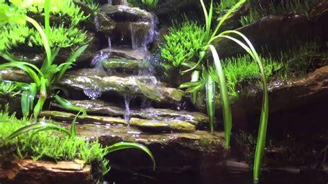 paludarium  week update waterfall doovi