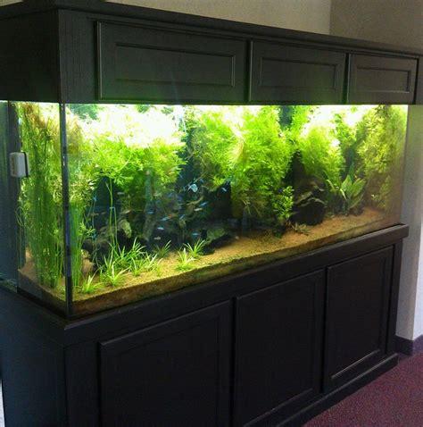 aquarium design basics 200 best indoor aquariums images on pinterest aquarium