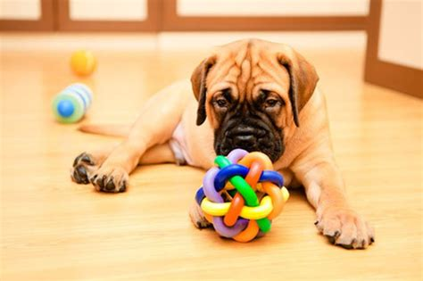 places to play with puppies set up a playroom to help potty your new pup or dogtime