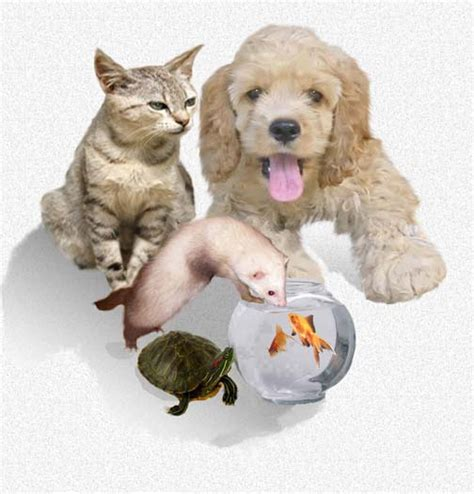 can dogs get scabies scabies page 34 information and advice