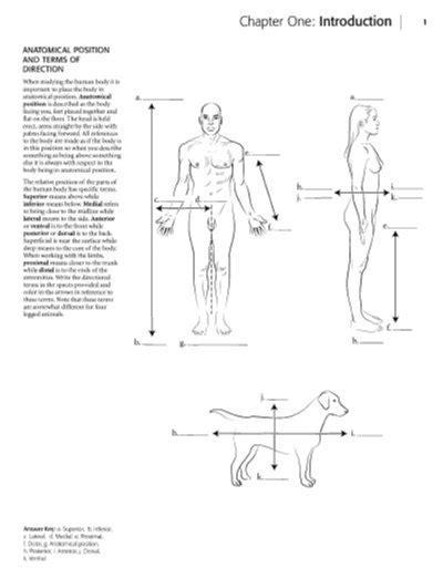 position coloring book pdf kaplan coloring book pdf